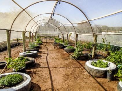 Horta Orgânica Reeditado