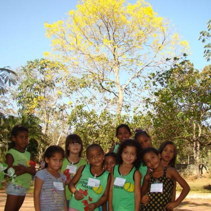 Árvores Malai - Ipê Amarelo da Serra (Tronco)